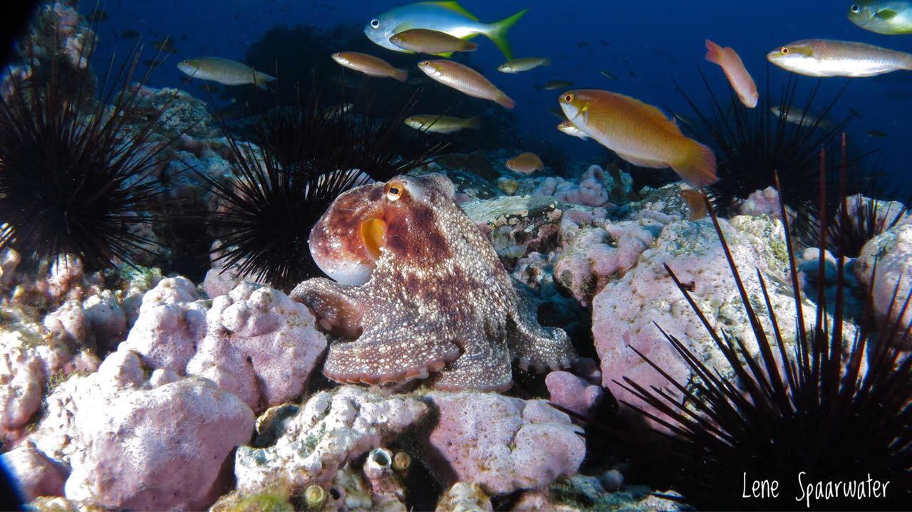 Cómo identificar peces mientras buceas (I parte)